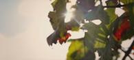 Vins Bios et Biodynamiques